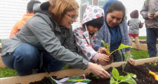 Photo of a GardenWorks volunteer helping a Head Start family plant in their garden plot at Tioga